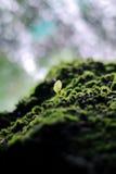 Mossig sten och ung grön växt med vattenfallbakgrunden Fotografering för Bildbyråer