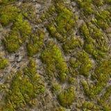 Mossig sten. Sömlös Tileable textur. Royaltyfri Foto
