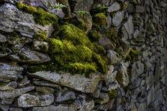 Mossig stenvägg som ut kryper arkivbilder
