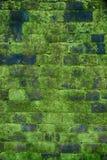 Mossig tegelsten av väggen Royaltyfri Fotografi