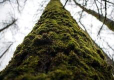 Mossig trädstam i den fuktiga skogen Royaltyfri Foto
