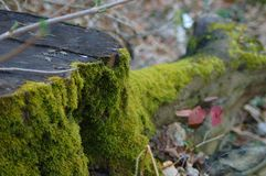 Mossig trädstam i en skog arkivfoton