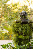 Mossig tropisk springbrunn royaltyfria bilder