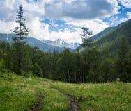 Mossig undervegetation i bergskog Fotografering för Bildbyråer