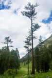 Mossig undervegetation i bergskog Arkivbild