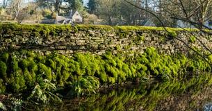 Mossig vägg för torr sten som reflekterar på vatten, Bibury, royaltyfria foton