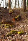 Mossiga avverkade trädstammar Arkivfoto