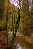Mossiga höstträd och en flod royaltyfria bilder