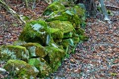 Mossiga stenar mellan falled ner sidor royaltyfri foto