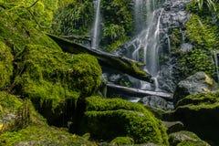 Mossiga stenblock och journal nära vattenfallet arkivfoton
