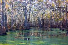 Mossiga swamplands med mangroveträd i Louisiana, USA royaltyfri foto