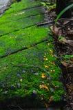 Mossiga tegelsten- och apelsinprickar Arkivfoton