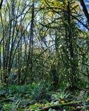 Mossiga träd royaltyfri bild