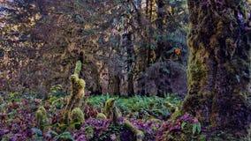 Mossiga träd i en skog Royaltyfri Fotografi