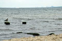 Mossiga träpelare och stenar i havet arkivfoton