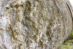 Mossiga väggDevetakskoy grottor i Bulgarien Royaltyfria Foton