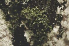 Mossigt och blöta, mörk textur Arkivfoton