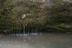 Mossigt vagga med vatten och ett blad Royaltyfria Bilder