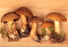 Mossiness mushrooms Stock Photos