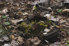 Mossing forest boot Royalty Free Stock Photography