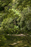 Mossman Gorge. Mossman River in the Daintree National Park, Queensland, Australia royalty free stock photography