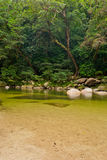 Mossman Gorge rainforest. Mossman Gorge, Daintree National Park, Australia Royalty Free Stock Images
