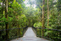 Mossman Gorge View Royalty Free Stock Images