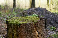 Moss on stub Stock Photos