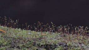 Mossor i tropisk regnskog arkivfilmer