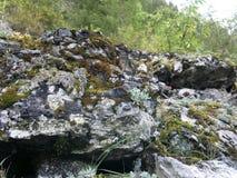 Mossor, laver och stenbräcka på en vagga Arkivfoto