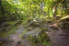 Mosstenen in het bos Stock Afbeeldingen