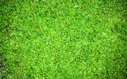 mossvägg Arkivbild