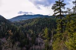 mossy δάση Στοκ Εικόνες
