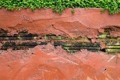 Mossy δάσος τοίχων Στοκ Φωτογραφίες