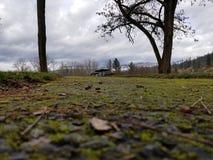 Mossy ίχνη Στοκ φωτογραφία με δικαίωμα ελεύθερης χρήσης