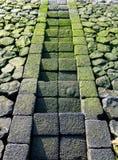 Mossy βήματα πετρών που οδηγούν στο νερό στοκ φωτογραφία