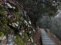 Mossy βράχοι που η πορεία ως υπόβαθρο στοκ εικόνες