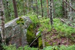 Mossy βράχοι στο δάσος στοκ εικόνα