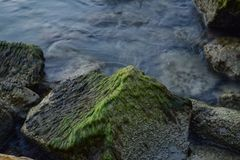 mossy βράχοι Στοκ φωτογραφίες με δικαίωμα ελεύθερης χρήσης