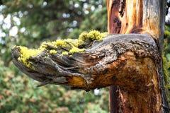 Mossy βραχίονας Στοκ Φωτογραφίες