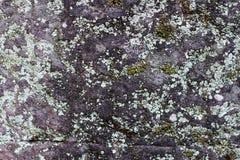Mossy γκρίζα φωτογραφία σύστασης πετρών φυσική πέτρα ανασκόπησης Ξεπερασμένη ανακούφιση βράχου Παλαιός τοίχος πετρών κτηρίου Στοκ Φωτογραφία