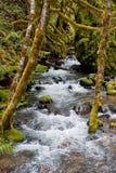 mossy δάση ποταμών στοκ φωτογραφία με δικαίωμα ελεύθερης χρήσης