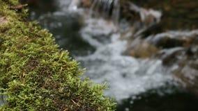 Mossy εστίαση ραφιών κούτσουρων απόθεμα βίντεο