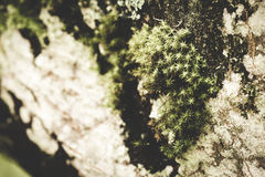Mossy και υγρή, σκοτεινή σύσταση Στοκ Φωτογραφία