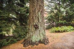 mossy κορμός δέντρων Στοκ Εικόνα