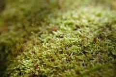 Mossy κορμός πεσμένος στο δάσος στοκ εικόνες
