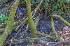 Mossy κούτσουρα και ρεύμα 3 στοκ εικόνα