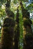 Mossy ξυλείες στοκ εικόνες