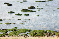 mossy πέτρες Στοκ εικόνα με δικαίωμα ελεύθερης χρήσης