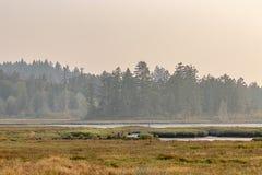 mossy πράσινες δασικές και βαθιές χρυσές χλόες με το νερό στοκ φωτογραφίες με δικαίωμα ελεύθερης χρήσης